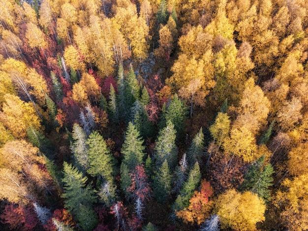 Kleurrijke herfstkleuren in bosvorm hierboven, vastgelegd met een drone.