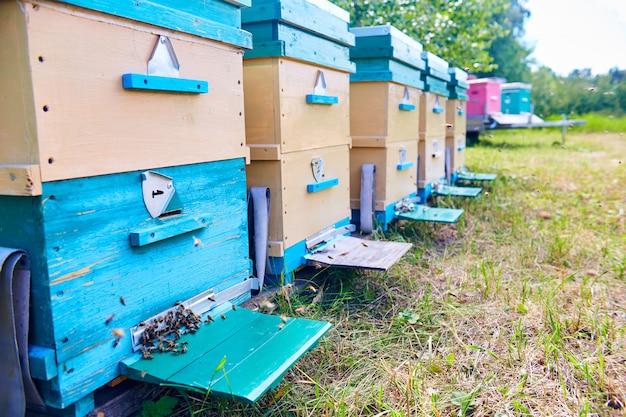 Kleurrijke hive boxes in bijenteelt
