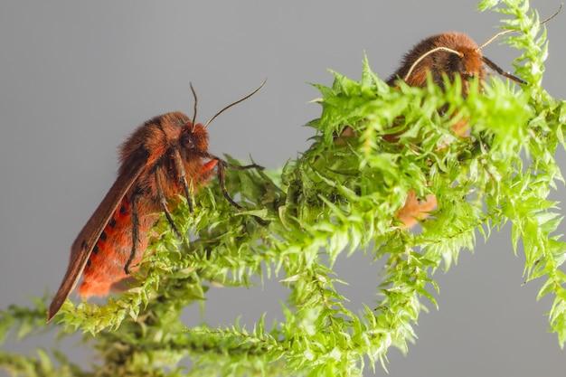 Kleurrijke insecten zittend op plant