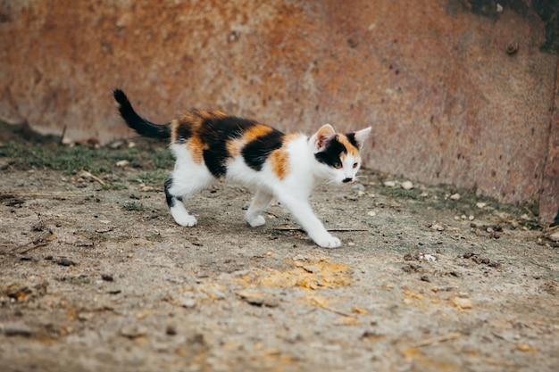 Kleurrijke kat die op een landbouwbedrijf loopt