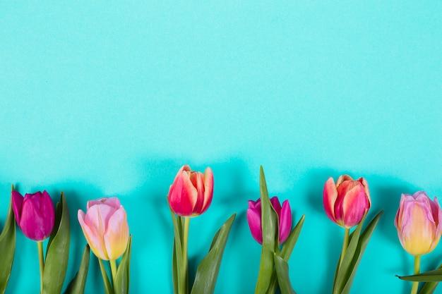 Kleurrijke knoppen van tulpen in de rij