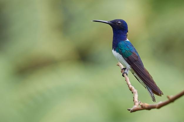Kleurrijke kolibrie die op een tak rust