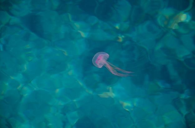 Kleurrijke kwallen op blauw water