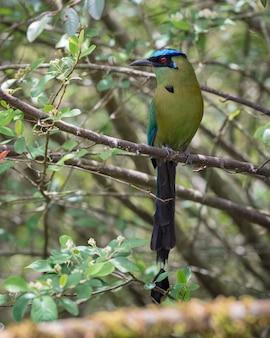 Kleurrijke langstaartvogel zat tussen de takken van een boom