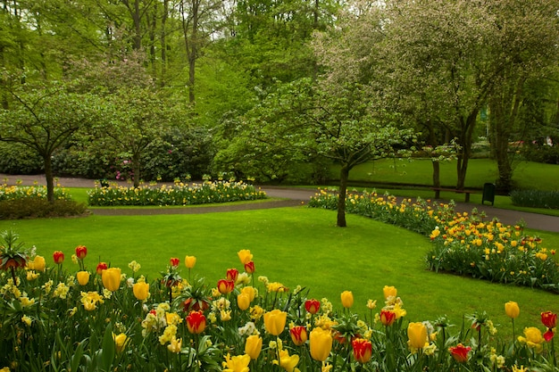 Kleurrijke lentebloemen en bloesem in nederlandse tuin 'keukenhof', holland