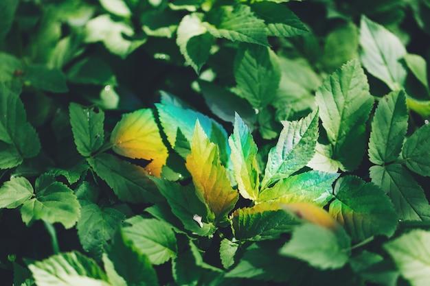 Kleurrijke lichte regenboog op een groen bosgebladerte.