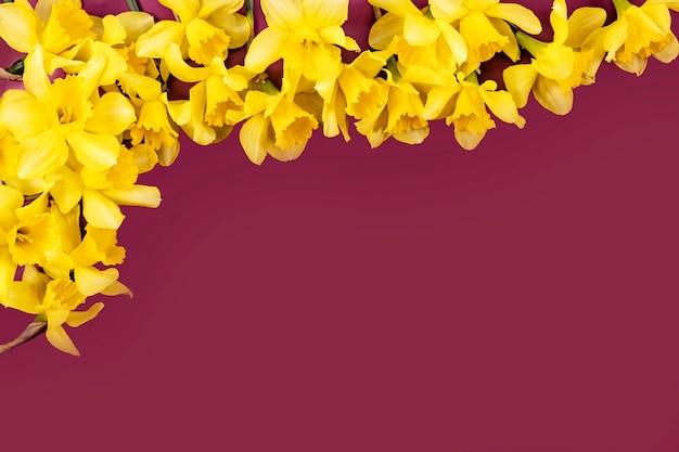 Kleurrijke narcissen frame achtergrond