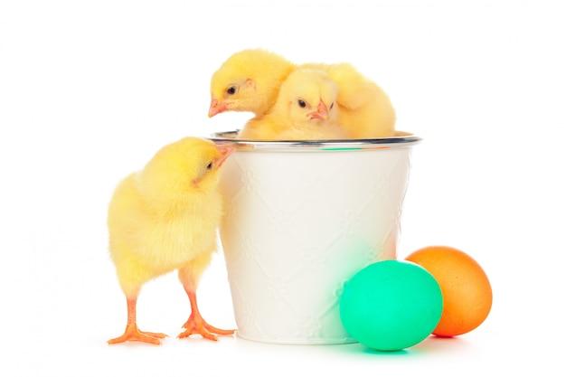 Kleurrijke paaseieren en schattige kleine kip geïsoleerd