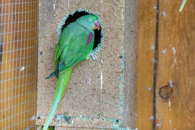 Kleurrijke papegaai in een kooi in een dierentuin.