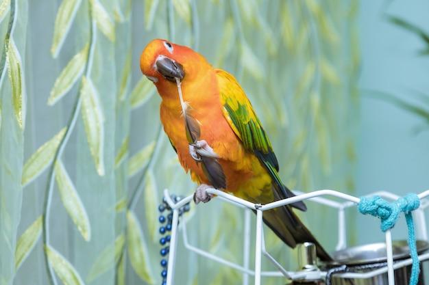 Kleurrijke papegaaien die bij het houden van een papegaaiveer zitten