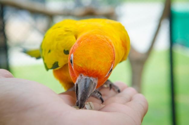 Kleurrijke papegaaien die op menselijke hand zitten