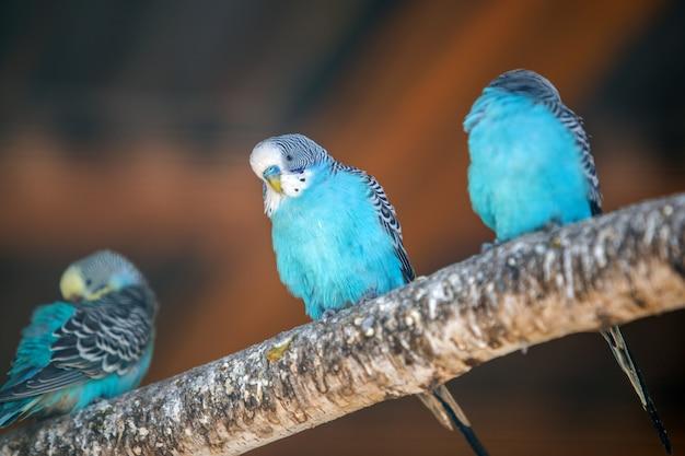 Kleurrijke papegaaien in een kooi in een dierentuin.