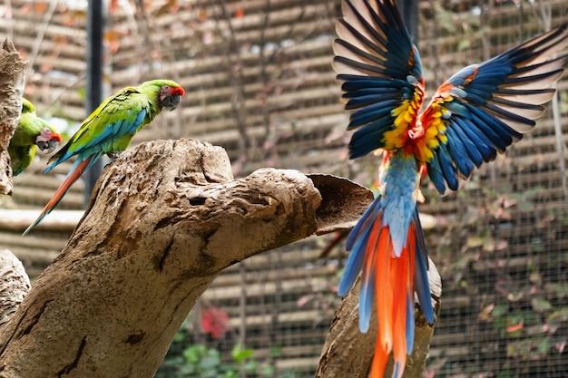 Kleurrijke papegaaien in een park op het eiland tenerife.