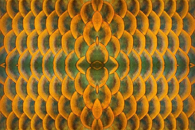 Kleurrijke patronen en huid van arowana-vissen.