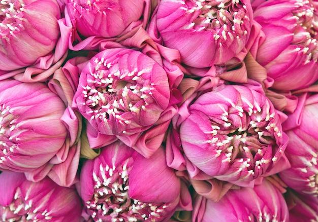 Kleurrijke patronen van lotus