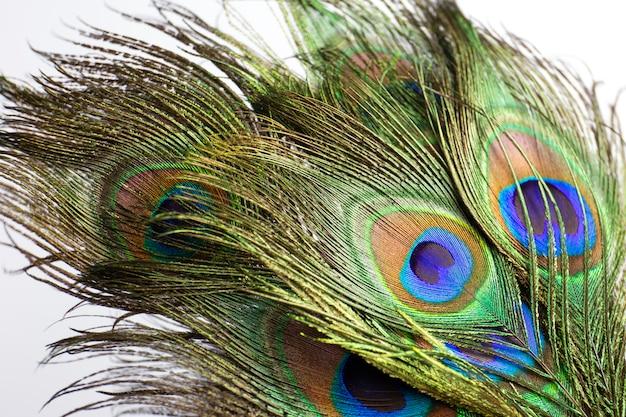 Kleurrijke pauwenveer.