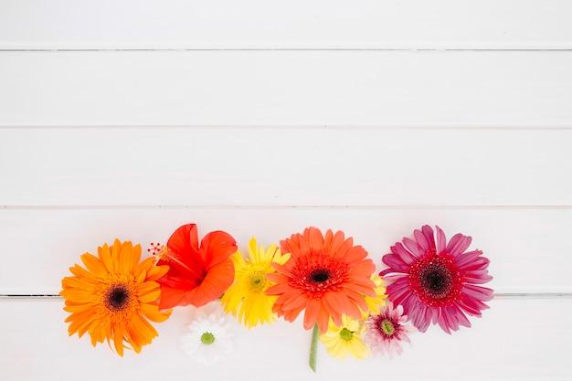 Kleurrijke regeling van bloemen op wit
