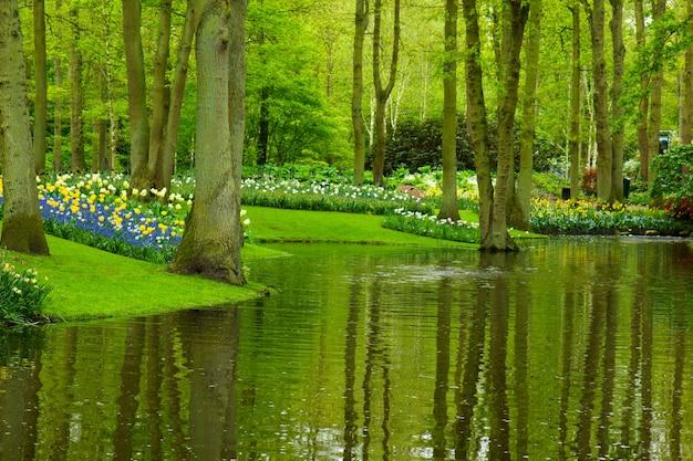 Kleurrijke rivier en bloembed in nederlandse tuin 'keukenhof', holland