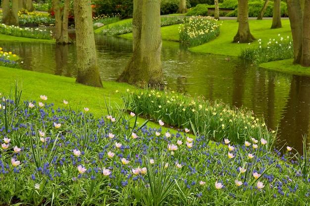 Kleurrijke rivier en bloembed in nederlandse tuin 'keukenhof', nederland