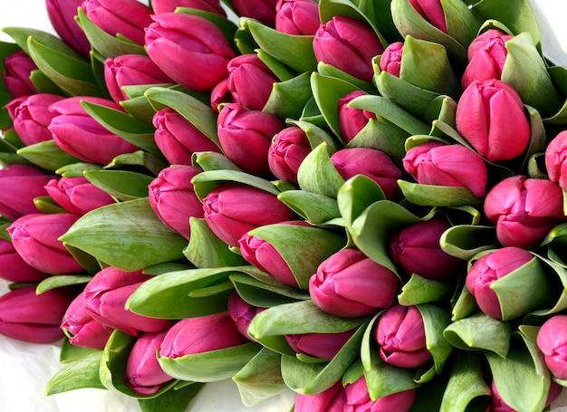 Kleurrijke roze sleutelbloemen