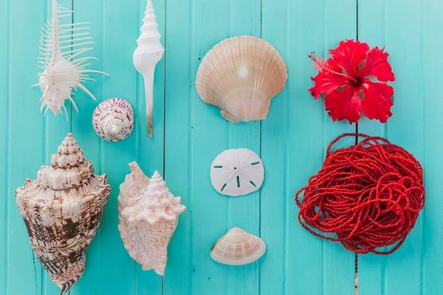 Kleurrijke samenstelling van zeeschelpen en rode roep