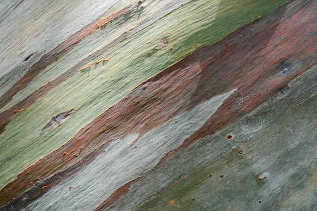 Kleurrijke samenvatting van de schors van de eucalyptusboom