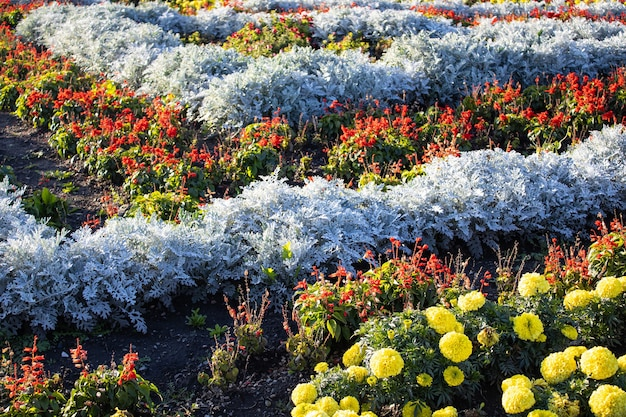Kleurrijke tuin bloem bed en gras gazon close-up