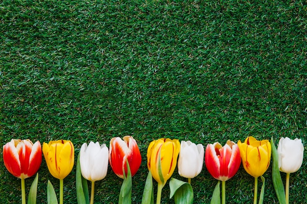 Kleurrijke tulpen op groen gras