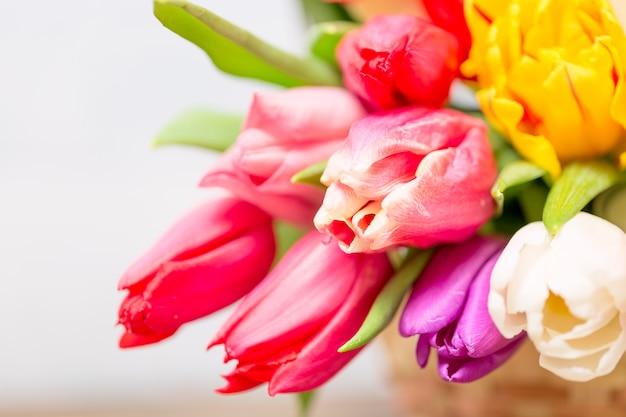Kleurrijke tulpenbloemen en mimosastruik in mand als groetkaart