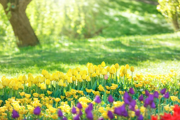 Kleurrijke tulpentuin in het groene park met zonnestralen