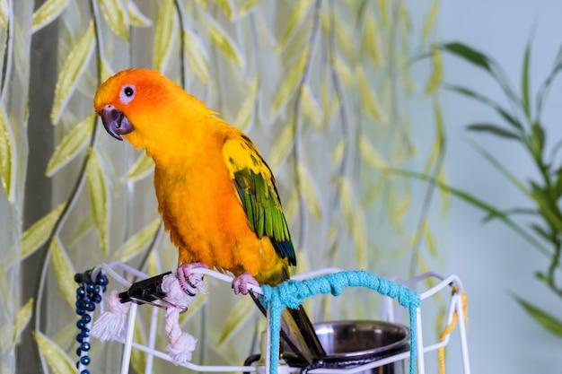 Kleurrijke turquoise papegaai close-up zit