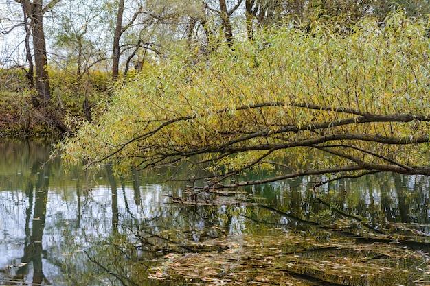 Kleurrijke, veelkleurige bladeren van bomen in een rivierbezinning. vroege herfstochtend op de kazanka-rivier in kazan. rusland.