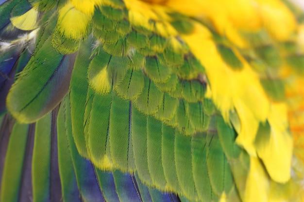 Kleurrijke verenachtergrond