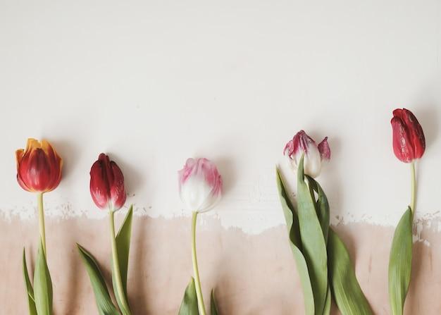 Kleurrijke verse tulpen op een lichte achtergrond