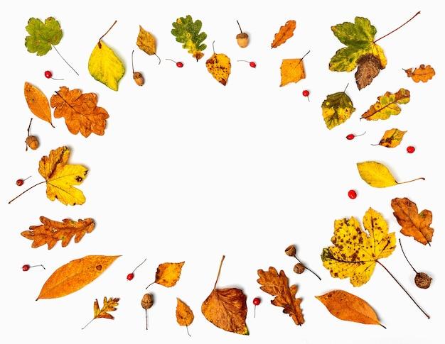Kleurrijke verzameling herfstbladeren die een wit omlijsten