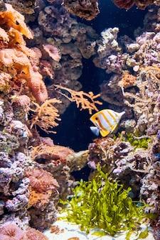 Kleurrijke vissen dichtbij stenen