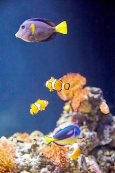Kleurrijke vissen met stenen