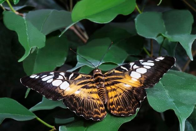 Kleurrijke vlinder met geopende vleugels