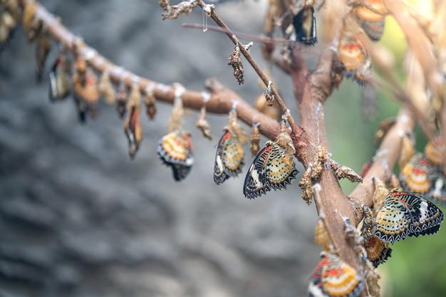 Kleurrijke vlinder op de boomtakken.
