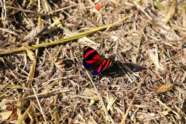Kleurrijke vlinder op droge grond van dode bladeren en takken. begrip leven en dood.