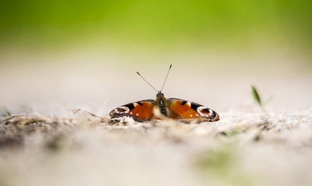 Kleurrijke vlinder op grond close-up