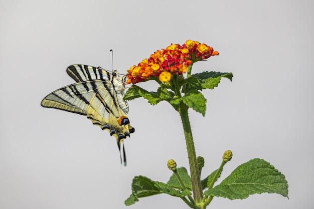 Kleurrijke vlinder zittend op bloem