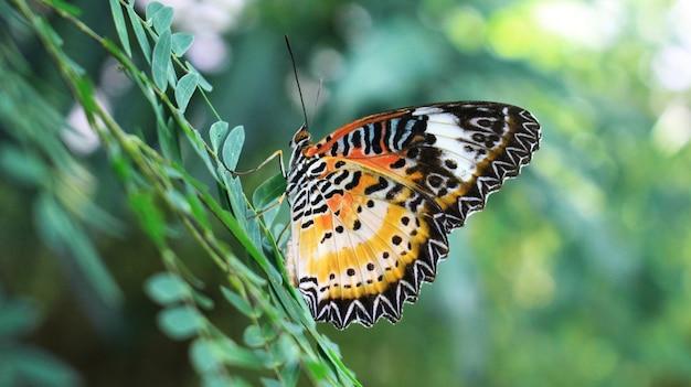Kleurrijke vlinders op de bladeren.