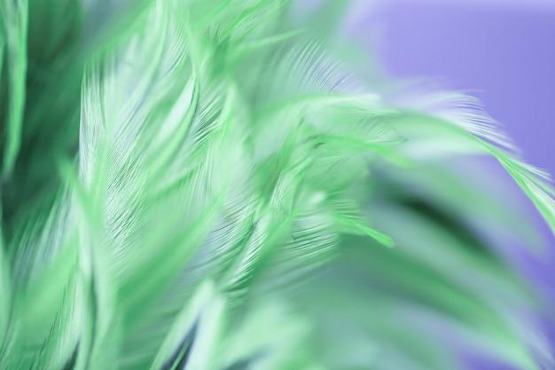 Kleurrijke vogel en kippenveren in zachte en onduidelijk beeldstijl voor de achtergrond, abstract art