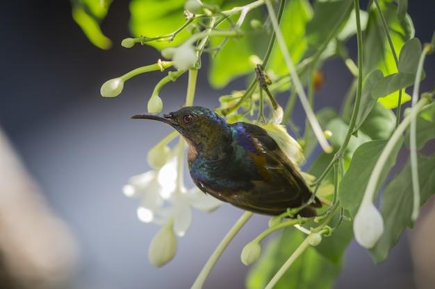 Kleurrijke vogel met lange snavel op boom