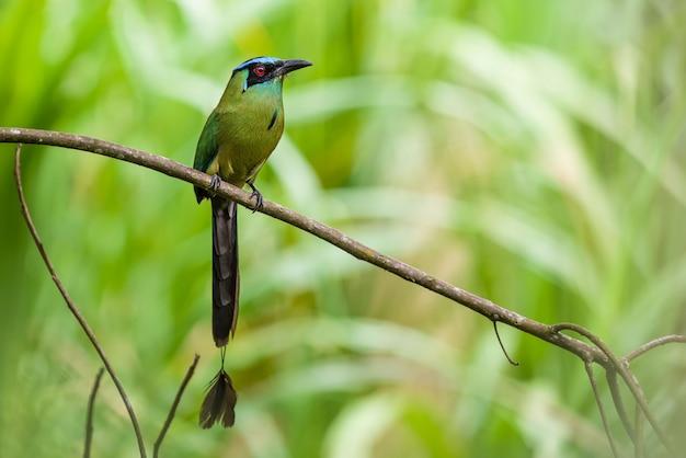 Kleurrijke vogel zat op een tak van de boom