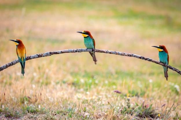 Kleurrijke vogels op een tak