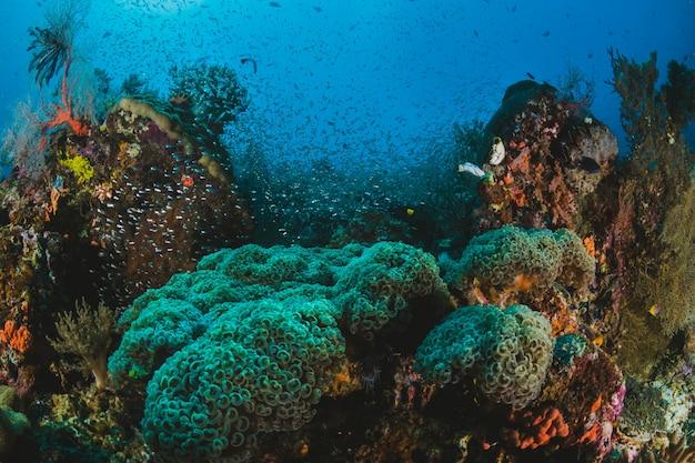 Kleurrijke zachte koralen groeien op een gezond rif