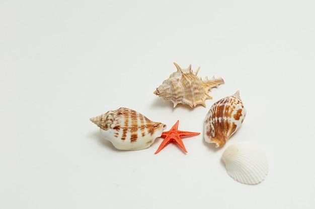 Kleurrijke zeeschelpen willekeurig verspreid over de witte muur. zomervakantie