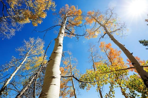 Kleurrijke zonnige bosscène in de herfst met gele bomen in heldere dag.